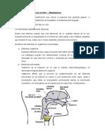 7) Patologia Del Lenguaje en El Niño