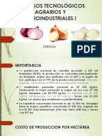 PROCESOS TECNOLOGICOS DE LAS HORTALIZAS DE RAICES cebolla