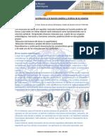 Músculos del dorso.pdf
