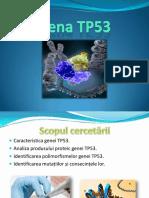 133914325-Gena-Tp53