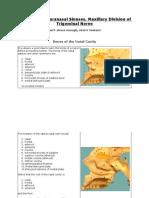 Nasal Cavity & Paranasal Sinuses