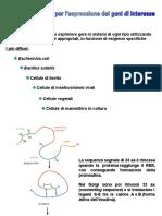 Vettori procariotici e promotori.ppt
