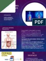 Sistema Digestivo (7)