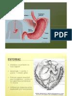 Cours 5 Estomac.pdf