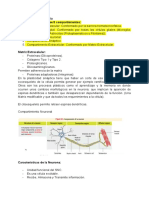 Clase 2 Neuro-Anatomía