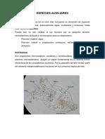 Rotíferos, artemias y dafnias