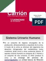 14_Sistema_urinario.pptx