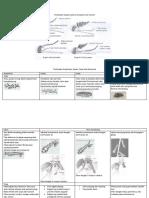 Perbedaan Anopheles, Aedes, Culex dan Mansonia
