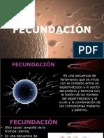 2. FECUNDACIÓN