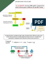 10-METABOLISMO ENERGETICO E MITOCONDRI