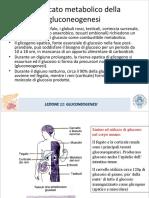 LEZIONE 11 Gluconeogenesi SMO