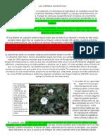 LAS HIERBAS ADVENTICIAS.pdf