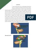 Biotk_MonicaBallestas.pdf