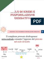 LEZIONE 8 Ciclo di Krebs e fosforilazione ossidativa.ppt