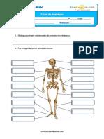 estudo doo meio.pdf