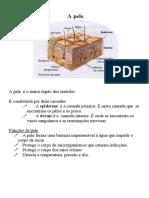 f33.doc