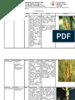 CLASE 8  Enfermedades de las gramíneas maíz,.docx