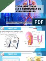 VIAS URINARIAS.pdf