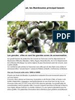 lavoixdupaysan.net-Cameroun Avocat les Bamboutos principal bassin de production