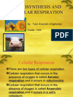 PHOTOSYNTHESIS AND CELLULAR RESPIRATION.ppt