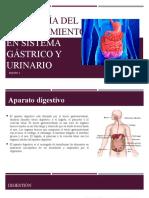 Fisiología del envejecimiento en sistema gástrico y urinario