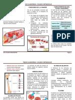 TRIPTICO-TEJIDO SANGUÍNEO..pdf