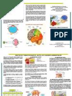 TRIPTICO SENTIMOS Y REACCIONAMOS ANTE CAMBIOS AMBIENTALES.pdf