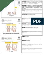 FICHAS MUSCULOS PDF