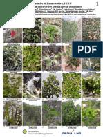 1031_peru_common_plants_of_los_pastizales_altoandinos (1)