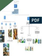 Mapa conceptual (5)