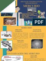 EFECTOS DE LA CONTAMINACIÓN POR METALES PESADOS MERCURIO