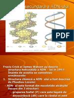 ADN- prezentare