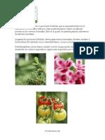 Usos y beneficios de la utilización de sustrato Kekkila y Pindstrup
