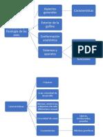 Cuadro sinóptico de la anatomía y fisiología de las aves.docx