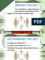 SexLinkage2.ppt