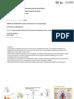 Funciones y Estructuras Del Sistema Nervioso