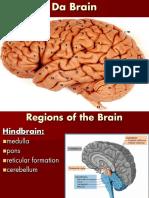 BrainStructureandFunction