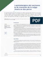 carcinoma en perros y pesticidas-causas-consecuemncias-trat