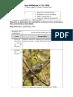 Colaborativo_Evaluacion_Final_POA (2).doc