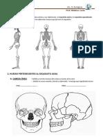 PRÁCTICO-7-sistema-óseo-2017-SANFE (1).pdf
