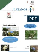 platanos.pptx