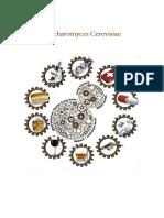 TRABAJO - Saccharomyces Cerevisiae