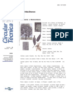 CT0073 Cariniana estrellensis