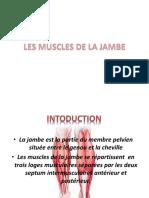 les muscles de la jambe
