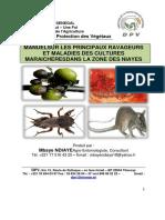 ravageurs et maladies des cultures maraîchères