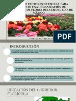 ANALISIS DE FACTORES DE ESCALA PARA LA ORGANIZACIÓN DE PRODUCTORES