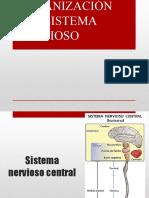 Organización Sistema Nervioso