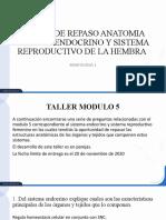 TALLER DE REPASO SISTEMA ENDOCRINO Y SISTEMA REPRODUCTIVO