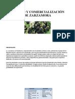 CULTIVO Y COMERCIALIZACIÓN DE ZARZAMORA