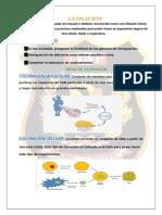 trabajo de clonación culminado-MATAMOROS-QUISPE.pdf